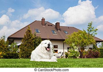 休む, 牧羊犬, 大きい, house., 犬, 監視, tatra, 前部, ポーランド語