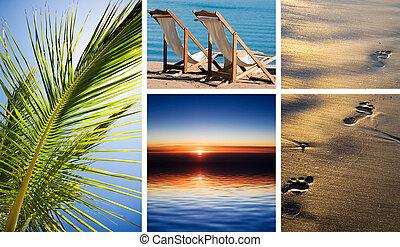 休暇, 中に, tropic