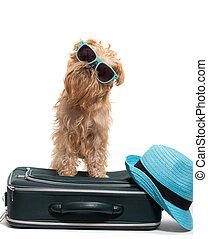 休暇, 犬