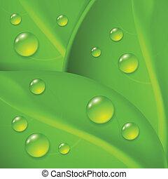 低下, 緑, leafs, 背景, 露