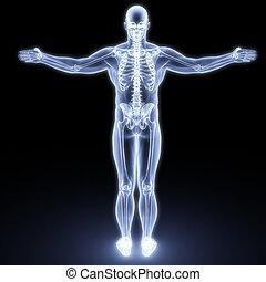 体, 人間
