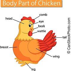 体, 図, 提示, 部分, 鶏