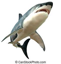 体, 大きく 白い 鮫