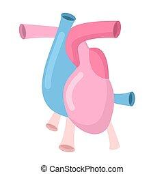 体, 心, 動脈, 隔離された, 心室, アトリウム, 解剖学, 静脈