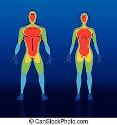 体, 暖かさ, 温度記録図, 女, 人