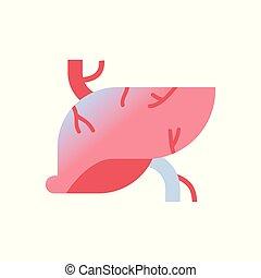 体, 概念, 人間, 器官, 医学, 解剖学, レバー, 背景, ヘルスケア, 白, アイコン