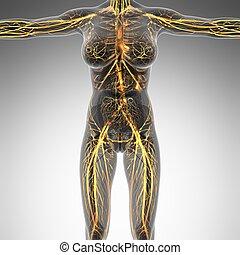 体, 科学, 容器, 解剖学, 血, 人間, x 線, 白熱