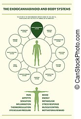 体, infographic, 縦, endocannabinoid, システム