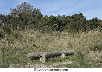 作られた, 森林, 木, ベンチ