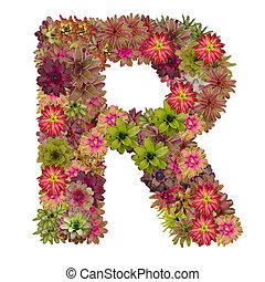 作られた, 背景, 隔離された, bromeliad, r, 手紙, 白い花