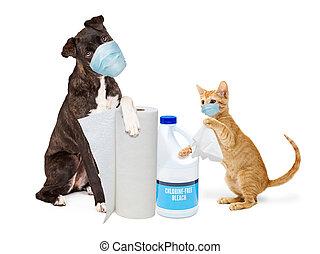 供給, 身に着けていること, ねこ, ウイルス, 清掃, 犬, 細菌, マスク