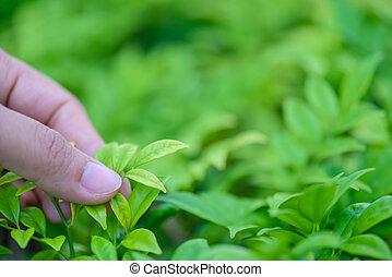 保有物, 葉, 手, バックグラウンド。, bokeh, 緑, 女性, 上に