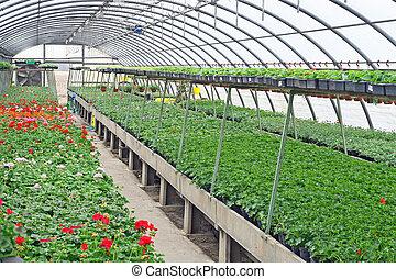 保護される, 成長する, 花, 植物, 温室, 内部