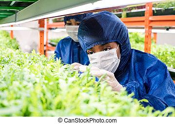 保護である, 研究者, workwear, 女性, 実生植物, 心配, 取得, 緑, 若い