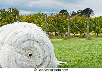 保護, 成熟, 覆蓋, 葡萄, 网, 捲