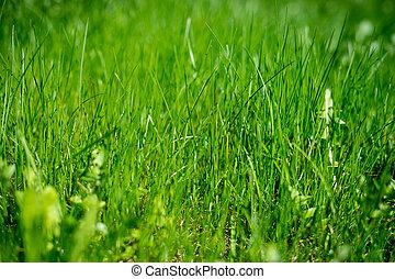 保護, 背景, concept., 結構, 環境, grass., environment., 綠色的領域, 草, meadow.protection