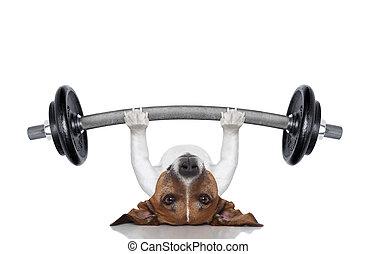 個人的な トレーナー, 犬