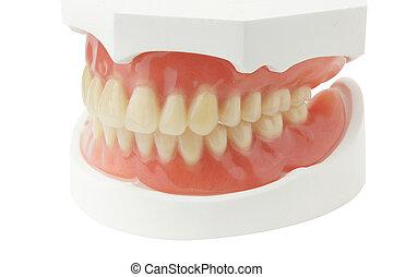 假牙, 由于, 裁減路線, 在懷特上, 背景