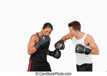 側視圖, ......的, 戰斗, 拳擊手