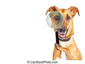 偵探, 模仿, 狗, 空間
