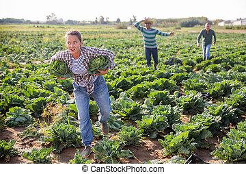 偷, 出逃, 婦女, 農場領域, 洋白菜