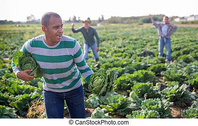 偷, 農夫, 出逃, hispanic, 領域, 卷心菜, 人