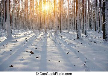 傍晚, 在, 冬天, 森林
