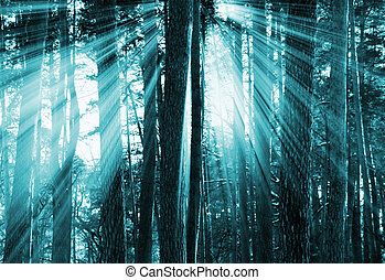 傍晚, 黑暗, 森林