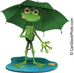 傘, 緑のカエル