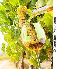 充滿, the, 玻璃, 由于, finest, 白葡萄酒