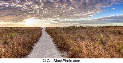 先導, 砂, によって, 道, 白, 草, 浜, 日没, tigertail