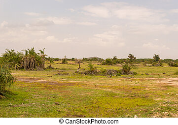 光景, の, ∥, 牧草地, ∥で∥, シダ, そして, ヤシの木, 中に, ∥, サバンナ, の, amboseli, 公園, 中に, kenya
