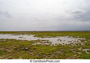 光景, の, ∥, 牧草地, 中に, ∥, サバンナ, の, amboseli, 公園, 中に, kenya