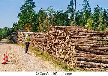 光景, 木材を伐採する, 風景, 森林