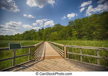 光景, 湿地帯, 風景, 通り道