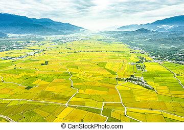 光景, 米, taiwan., 航空写真, フィールド, taitung, 美しい