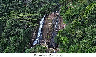 光景, 航空写真, rainforest, 滝