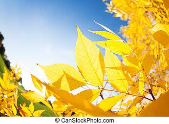 光線, 太陽, 葉, 秋, によって, 灰, 来なさい