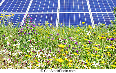 光起電, パネル, 野生の 花
