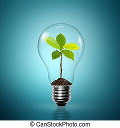 光, 裡面, 燈泡, 新芽