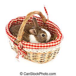 兔子, 在, a, 籃子, 上, a, 白色 背景