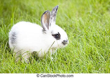 兔子, bunny, 婴儿, 在中, 绿色的草