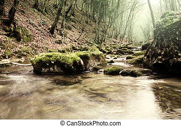 入り江, 中に, 森林