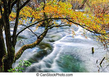 入り江, 秋, 木, 流れること