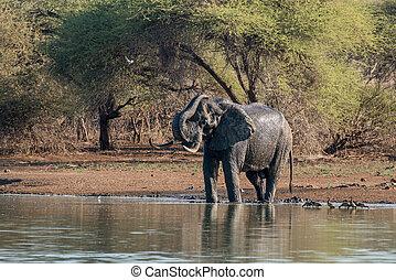 入浴, 象