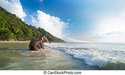 入浴, 象, 上に, ∥, 熱帯 浜, バックグラウンド。