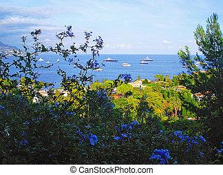 全景, 以及藍色, 花