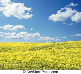 全景, 陽光充足的日, 黃的領域