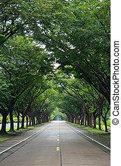 兩個都, 樹, 邊, 路