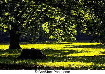 公园, 在中, 春天时间